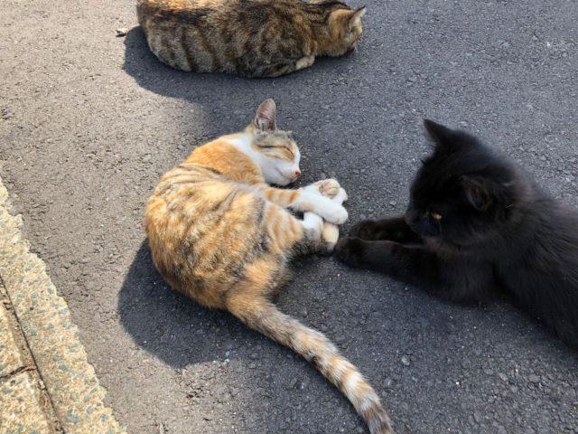 相島猫写真